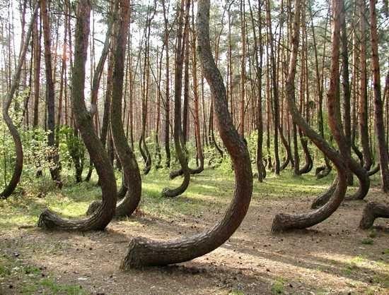 k17lengyel-erdő