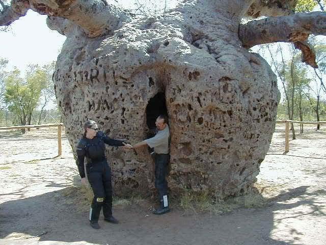 k8Boab-Prison-Tree